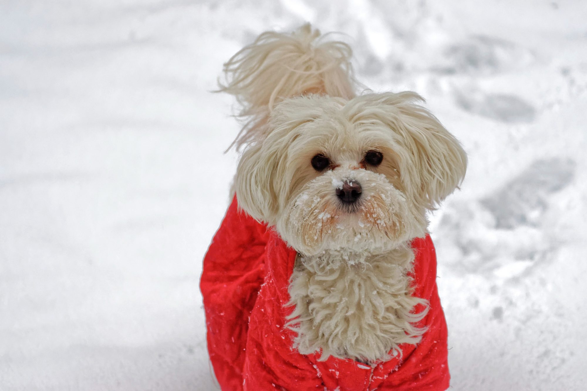 Winter weather pet safety
